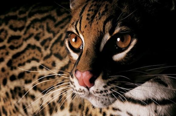 endangeredspecies1dut