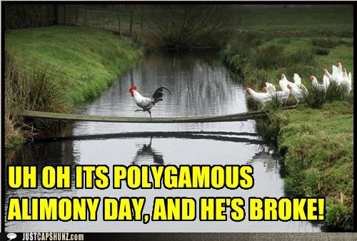 funny-captions-polygamous-alimony-day