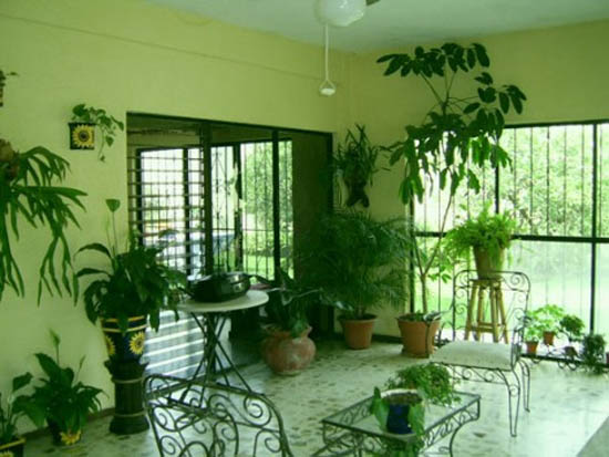 indoor-plants-for-interior-decorations-tt