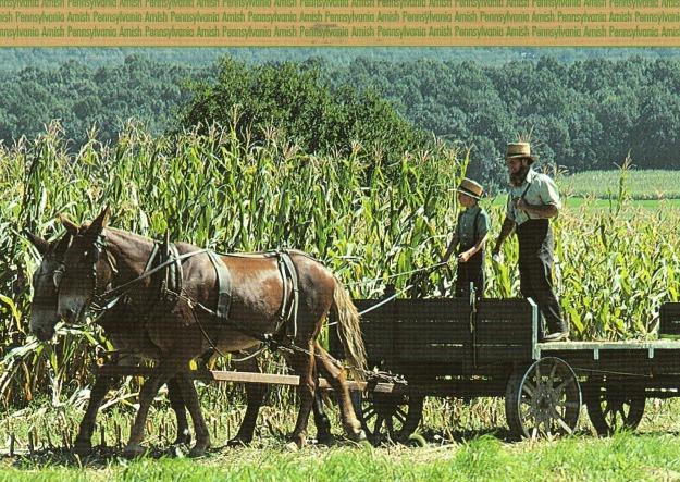 pennsylvania amish farm