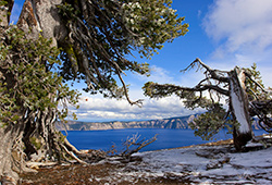 Ancient.Juniper.Crater.Lake.OR_4714