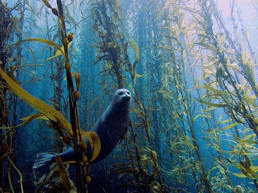 seal-winner