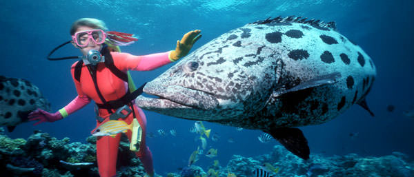 Great-Barrier-Reef-Diving-13