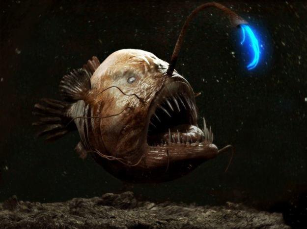 ocean-creatures-angler-fish-bright