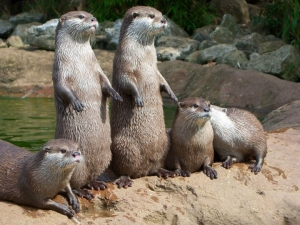 s-Just-some-otters.