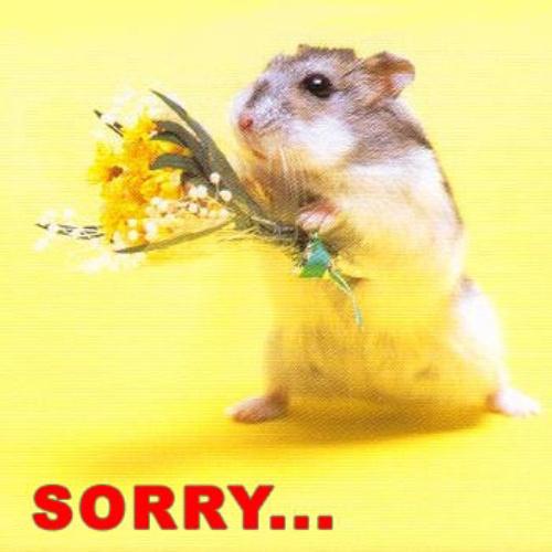 apology_mouse