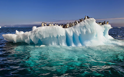 awesome-view-of-nature-penguins-on-ice-in-antarctica-ocean-free-download-best-desktop-high-resolution-wallpapers-of-ocean-ice