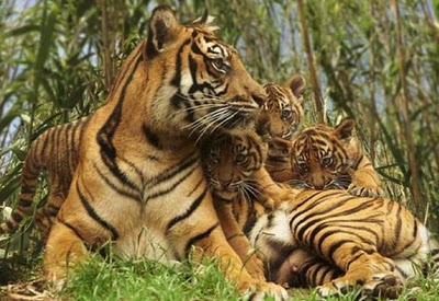 22-11-10_-_Media_Release_-_Sumatran_Cub_Birth