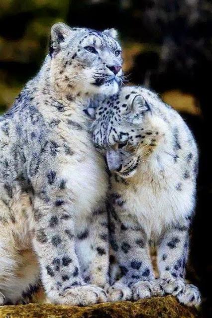 sharing 32 inspiring animal wildlife pictures