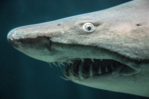 jonathan carr facebook shark