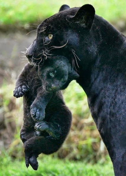 Animals-and-Their-Babies-18-634x885