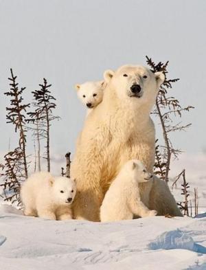 s-Furry-family