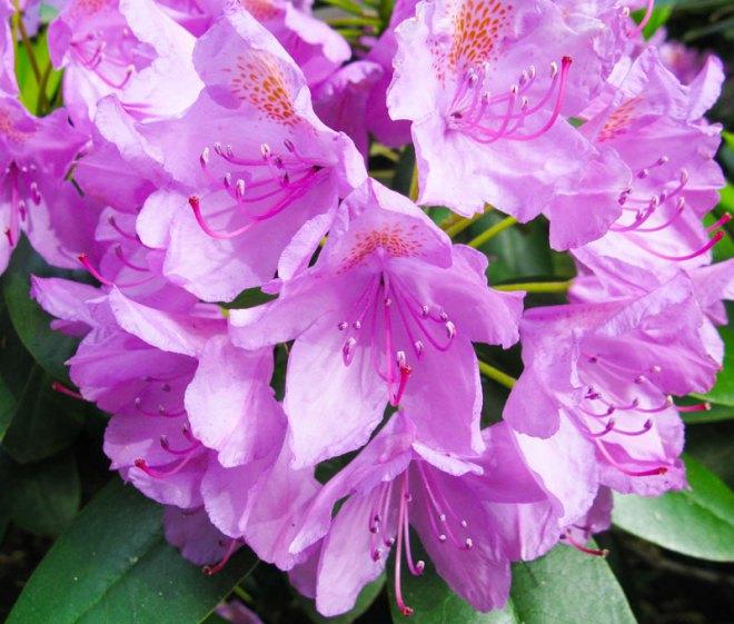 zuri_zuberi_flowers_misc_1