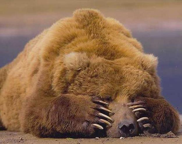 Спать, спать, спать - sleep, sleep, sleep (goo.gl/rbBYHC)