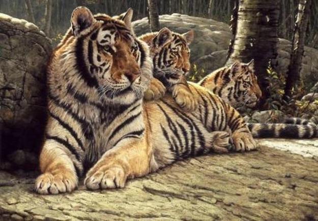 Семья тигров (goo.gl/L14i6G)