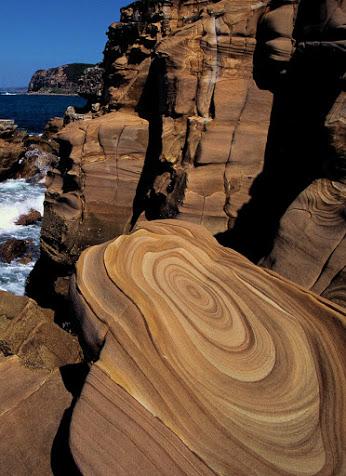 20141105-Buddi National Park  South Wales-Australia -00078667