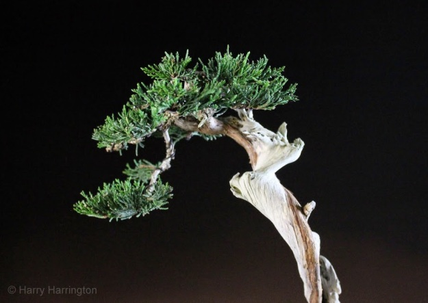 bonsai images 2014-11-24 122 copyright