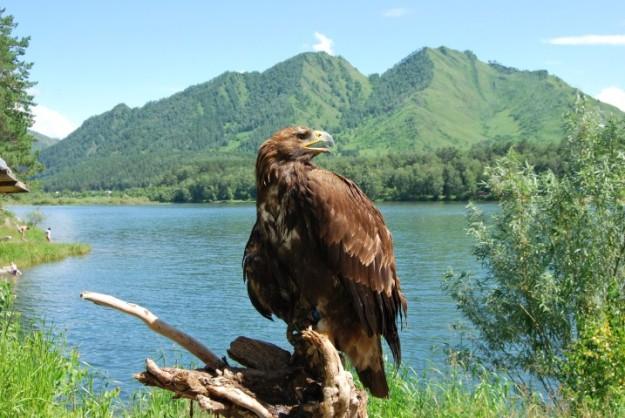 Орел - птица гордая