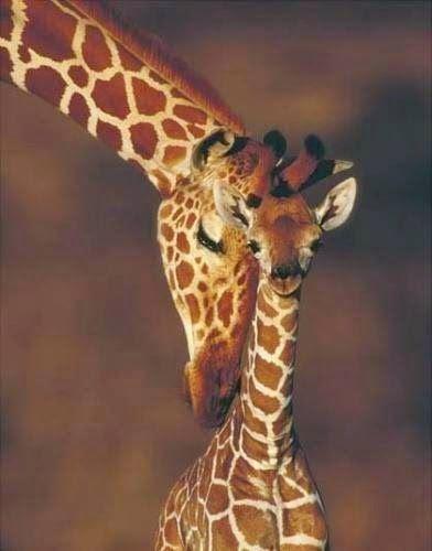 Giraffe & Mom