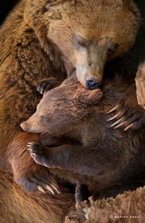 s-Bear-hugs(2)