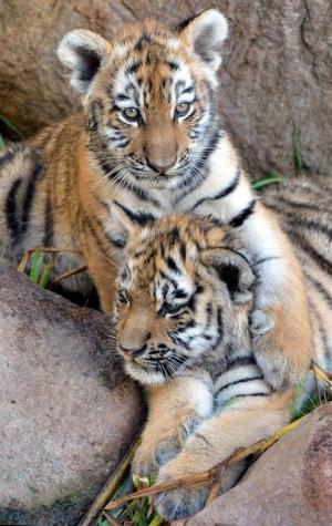 s-Cub-cuddles