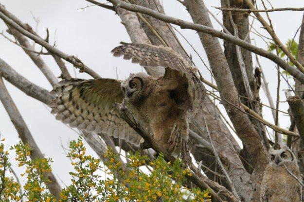 Testing my wings by Kaptive8    http://goo.gl/lW2mcA