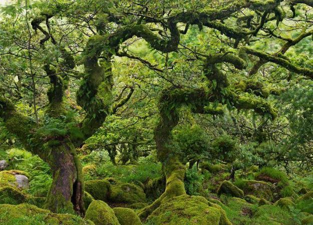 wistmans-wood_5
