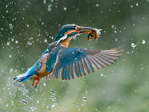 birds_500