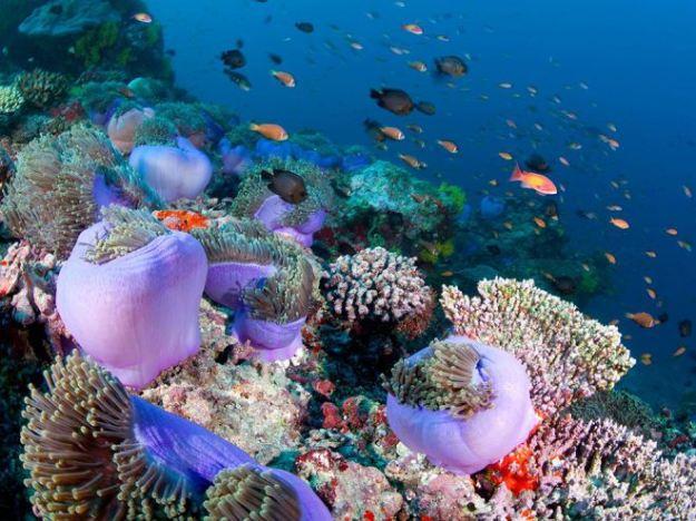 coral-reef-maldives