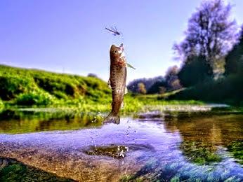 اشياء جميلة-سمك -طبيعي-ماء