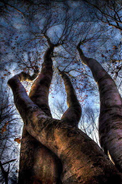 Freak of nature - Darko Geršak Photography 500px.com-photo-93704675 #tree #branches #nature