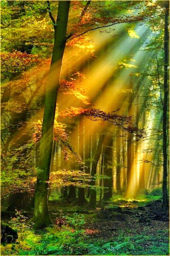 Golden-Sun-Rays-Schwarzwald-Germany