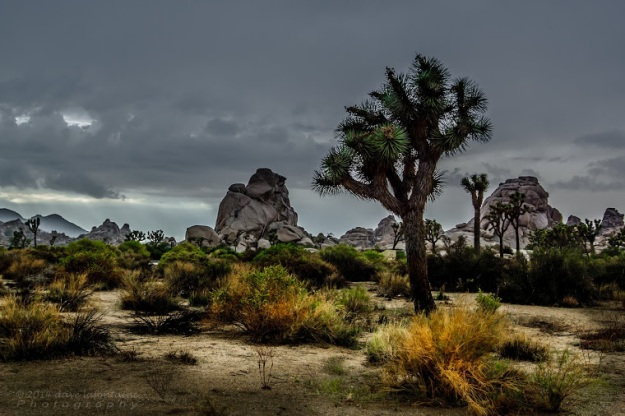 Joshua Tree Weather
