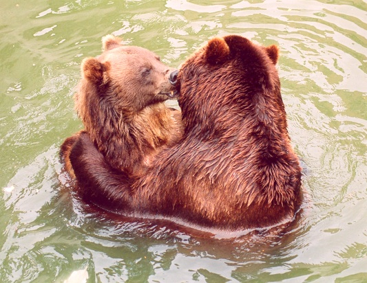 Moscow-Bears-Jpeg