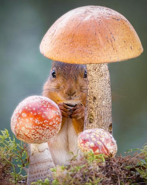 Mushroom Wishes by Geert Weggen