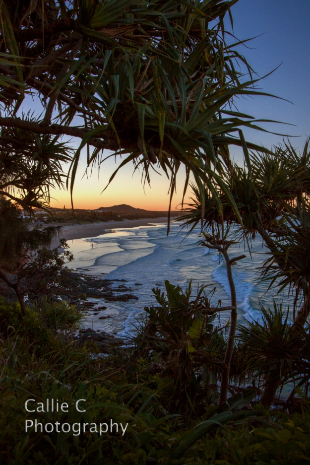 peregian-spings_2718