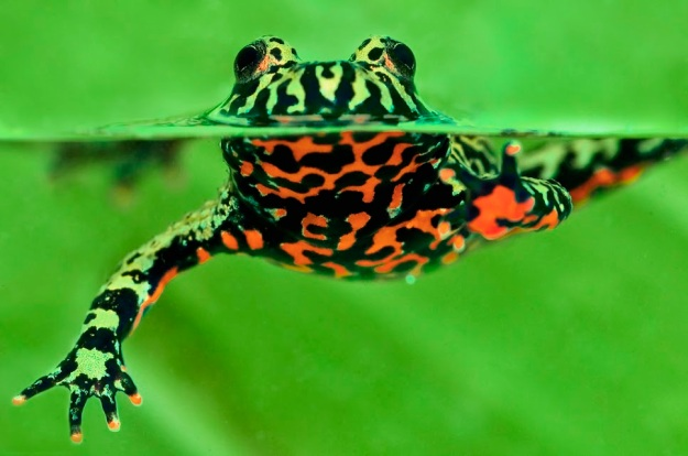 Rainforest Diver_Mohammad Husain
