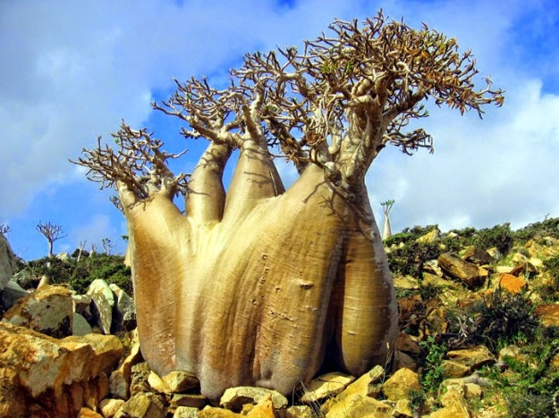 Strange-places-on-earth-from-alien-planets-14