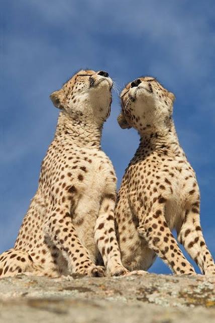 TOP-10-Emotional-photos-of-animals_042
