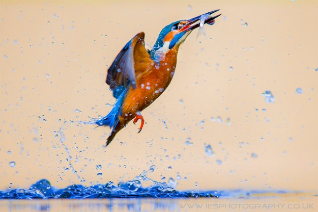 Kingfisher Bird. Источник: http://goo.gl/qr7ed