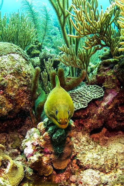 54199030a44e3720dbf5671c3c3dd17e............Moray eel, Belize