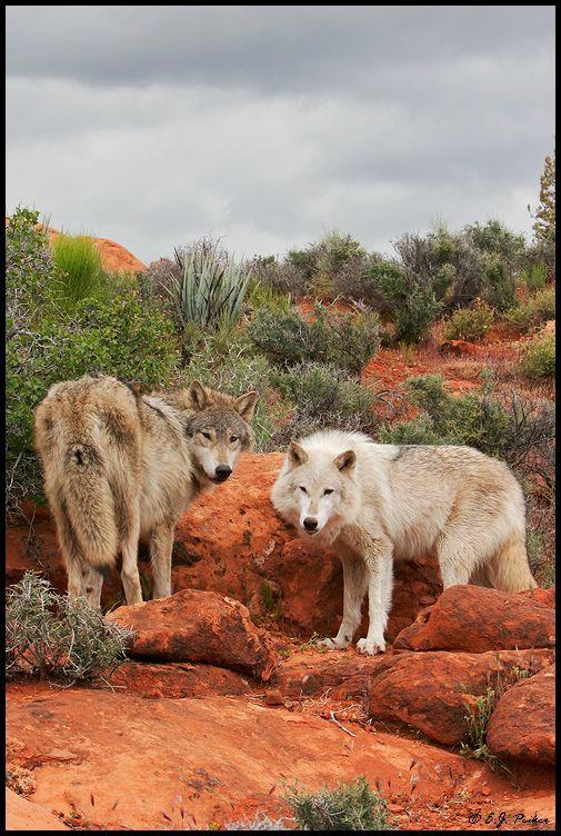 sharing 28 inspiring wild animals