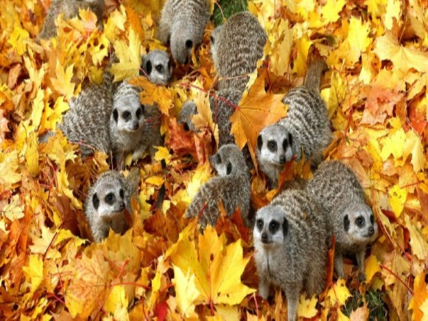 animals-in-autumn-wcth15-640x319