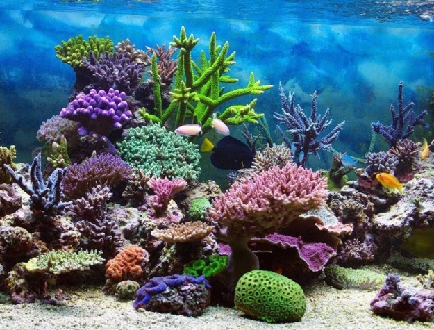 Beautiful coral reefs.