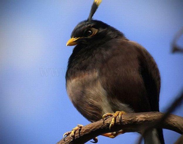 real-life-angry-birds-4