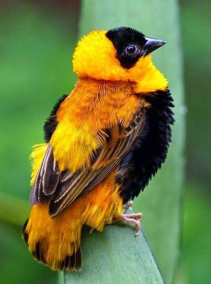bird5515 - 1