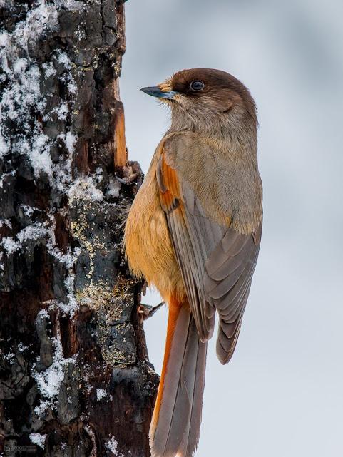 birdsinfocus01