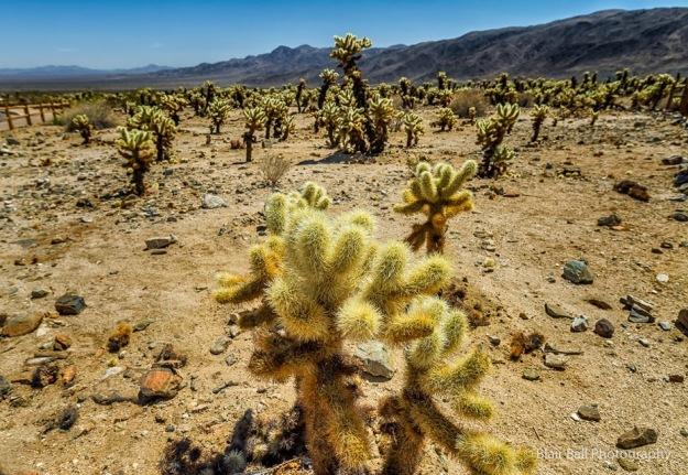 Joshua Tree National Park Images-99