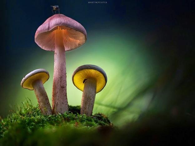 mushrooms-martin-pfister-6