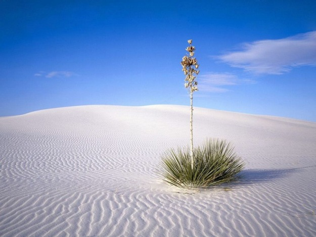 white_sands_national_park_2
